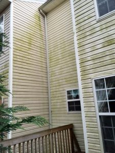 Dirty and moldy house before vinyl siding Greenville Low pressure washing residential pressure washing